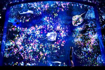 enosui_night_01.jpg